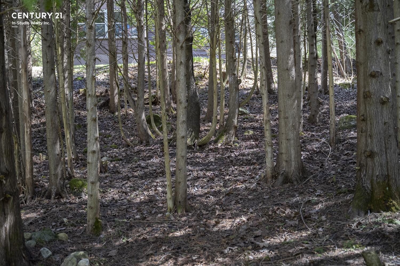 Cedar Trees, West Grey Ontario
