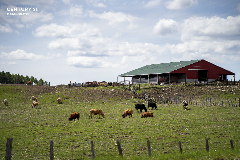 Grey Highlands Cattle Farm