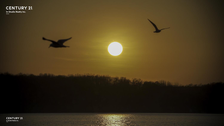 Seagul in Wiarton Sunset