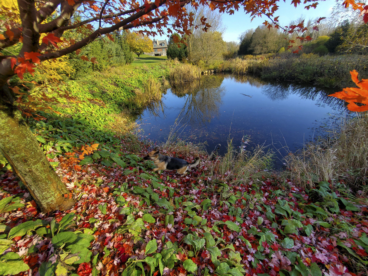 South Saugeen River Fall, Hanover Real Estate