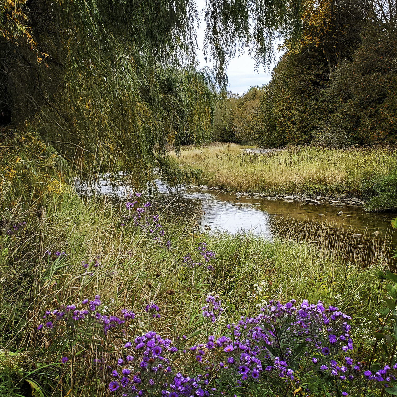 South Saugeen River Spring, Hanover Real Estate
