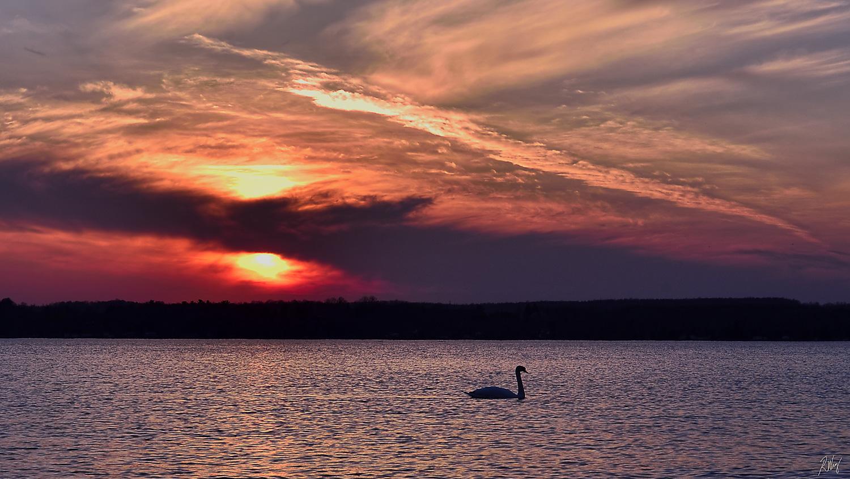 Swan Sunset, Owen Sound Real Estate - Rob Wray