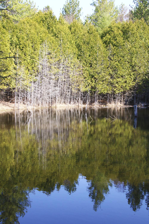 River Scene near Williamsford, Ontario, Williamsford Real Estate, Chatsworth Real Estate