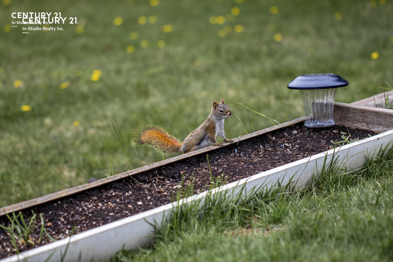 Grey County Wildlife - chipmunk