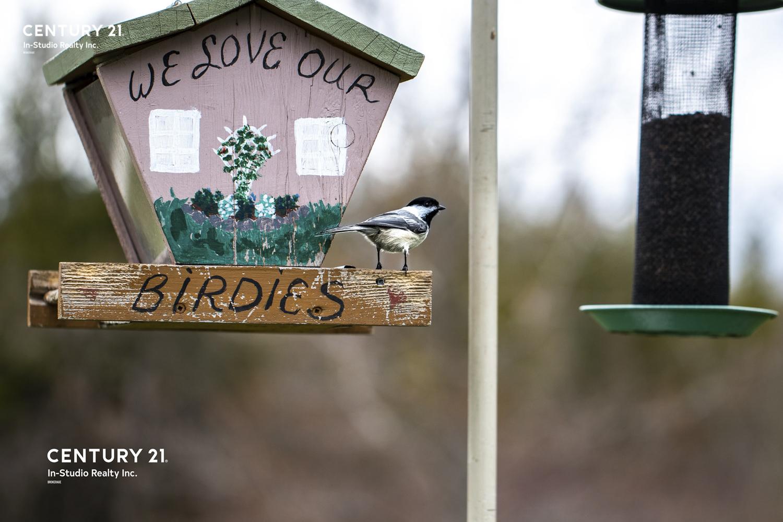 Grey County Wildlife - Bird