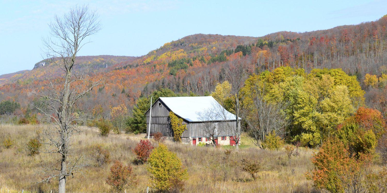 Beaver Valley (Fall) Grey Bruce Real Estate - Mary Blair